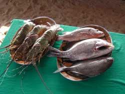 goa seafood India Special   Goa